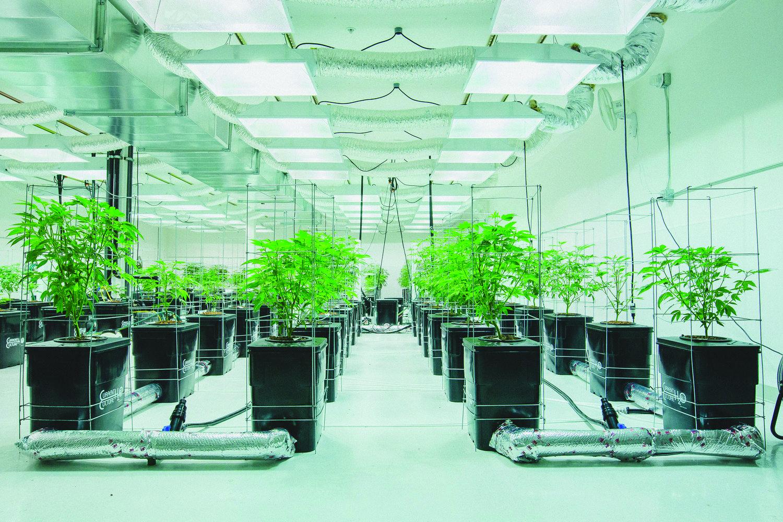 Pictures of hydroponics setups
